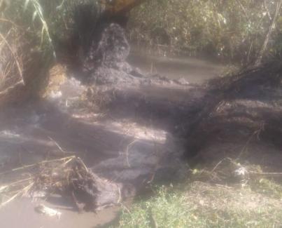 La DRH se encuentra realizando tareas de limpieza en el Canal Monteagudo